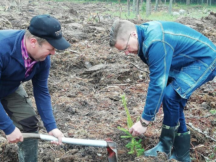 Pekka Ahokas ja Pertti Hakanen isuttamassa siirtokarjalaisten muistometsää.
