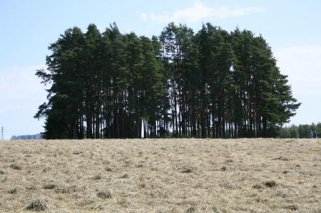 Kuva 13: Liuksialan kartanon kappeli metsäsaarekkeessa
