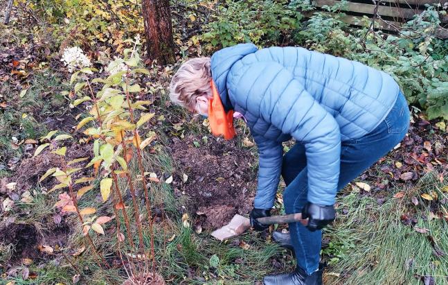 Turun Karjala-Seuran nykyinen pj. Marja-Liisa Pessinen samoissa puuhissa.